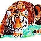 Tiger by Luke Tomlinson