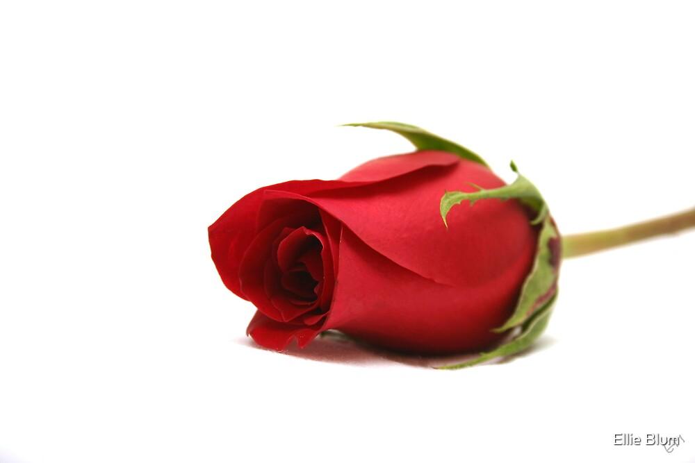 Red rose by Ellie Blum