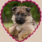Sable Puppy in Heart by Sandy Keeton