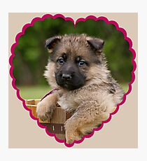 Sable Puppy in Heart Photographic Print