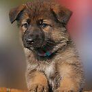 Darling Puppy by Sandy Keeton