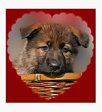 Puppy Red Heart Photographic Print