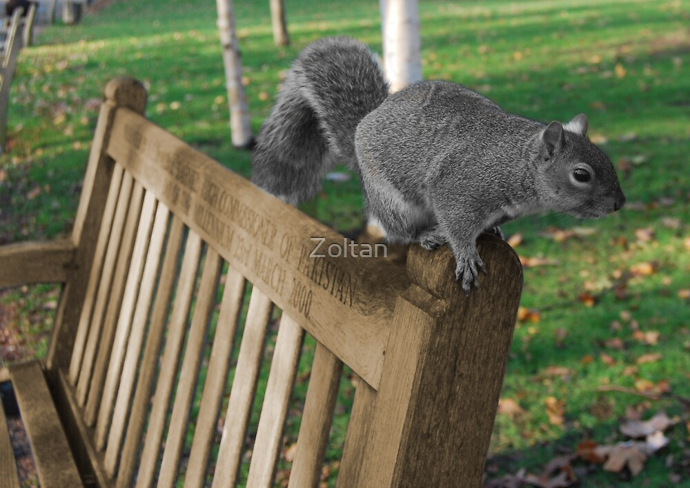 The squirrel by Zoltan