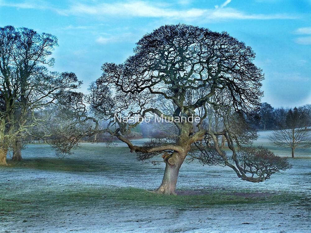 Cold Beauty by Nasibu Mwande