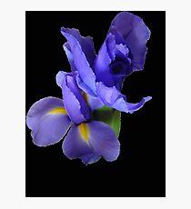 Incredible Iris on black Photographic Print