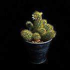 Cacti Flowers by Simon Duckworth