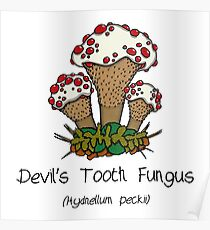 Devil's Tooth Fungus (without smiley face) Poster