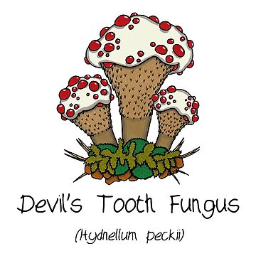 Devil's Tooth Fungus  by Immy
