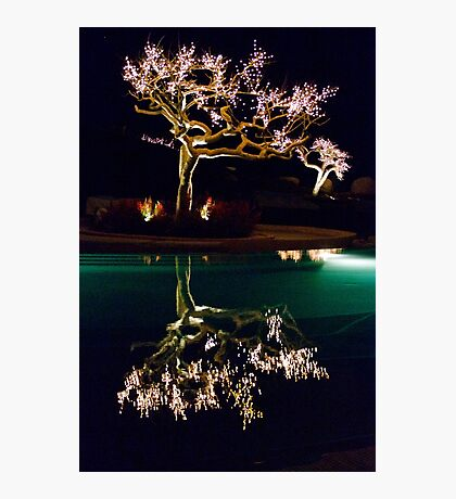 Beauty By Night Photographic Print