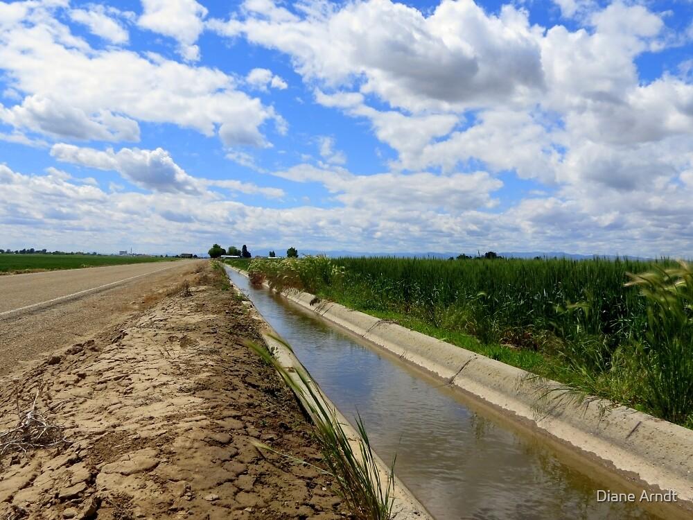 Irrigation Row by Diane Arndt