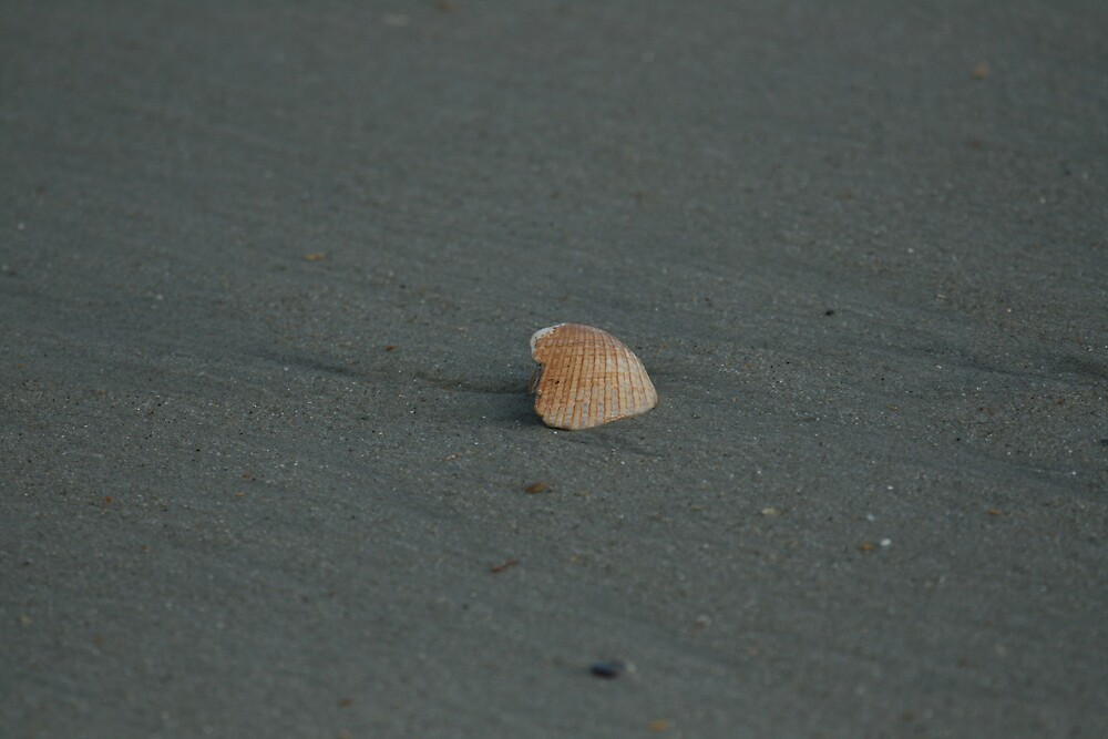 A shell by sommershots
