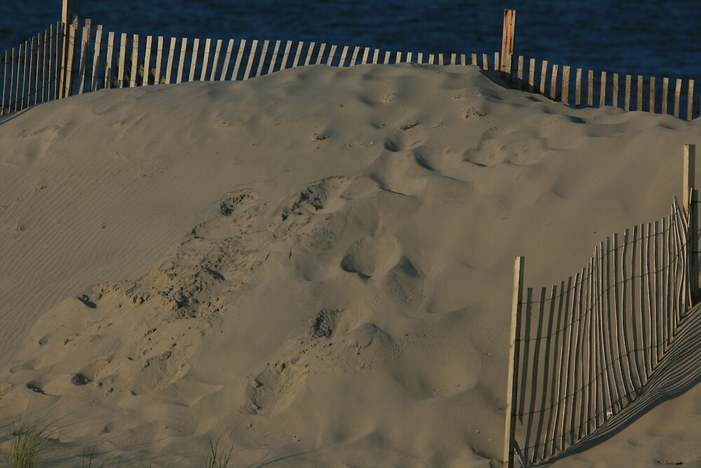 Steps on the dunes by sommershots