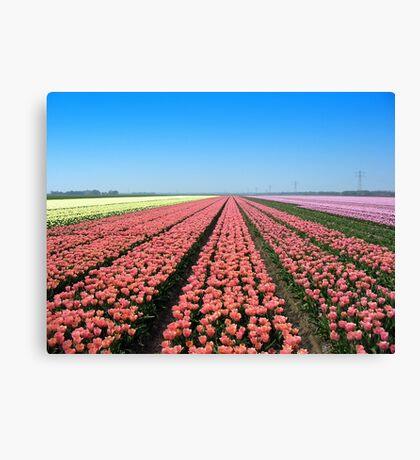 Tulips.. Tulips.. Tulips.. Canvas Print
