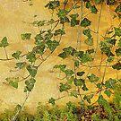 Ivy by Fara