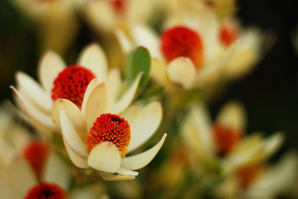 native flowers by Janet Leadbeater