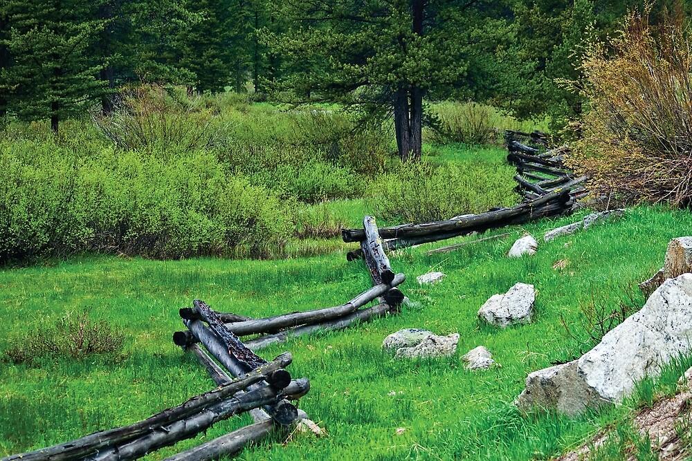 Rail Fence by Bryan D. Spellman