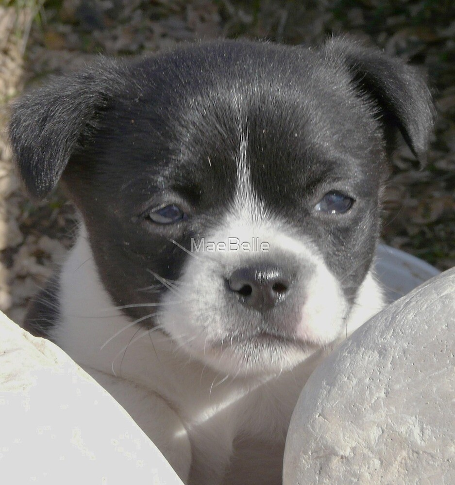 Kats Pup by MaeBelle