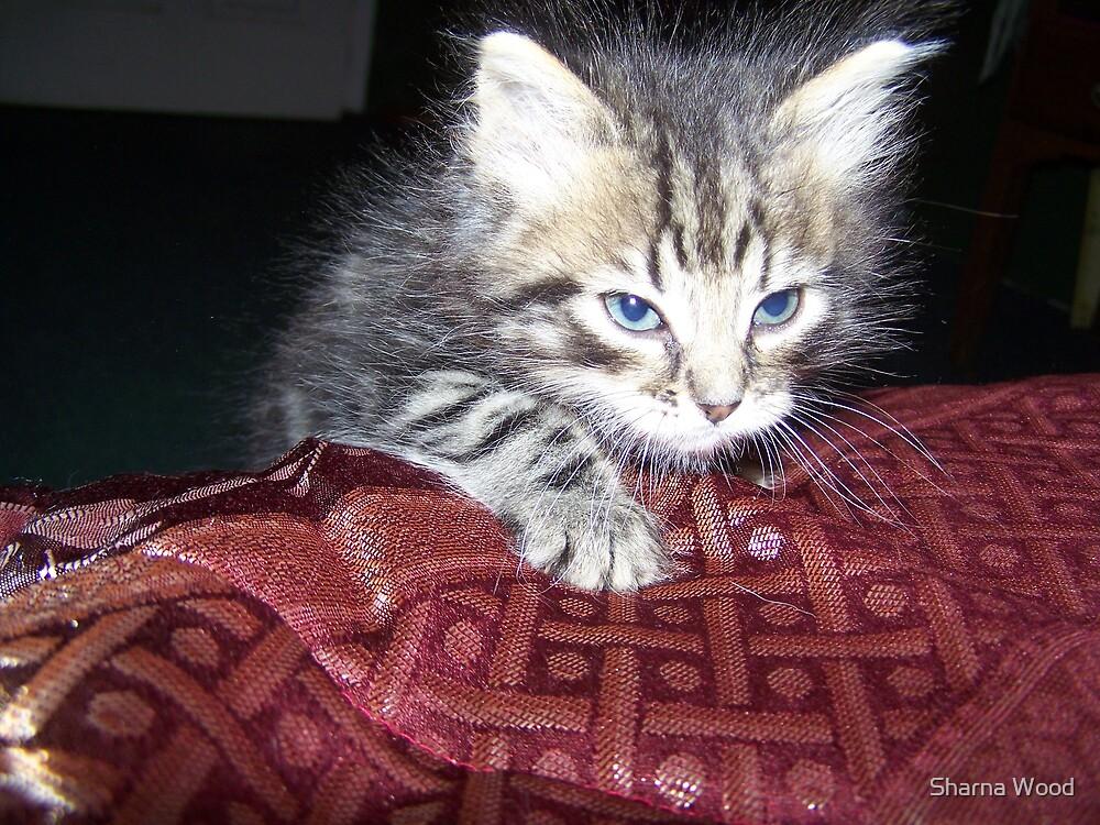 Sneaky Kitten by Sharna Wood