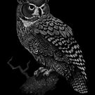 Great Horned Owl by Signe Nordin