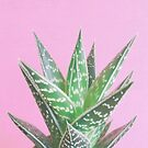 Pink Aloe Tiki by Cassia Beck