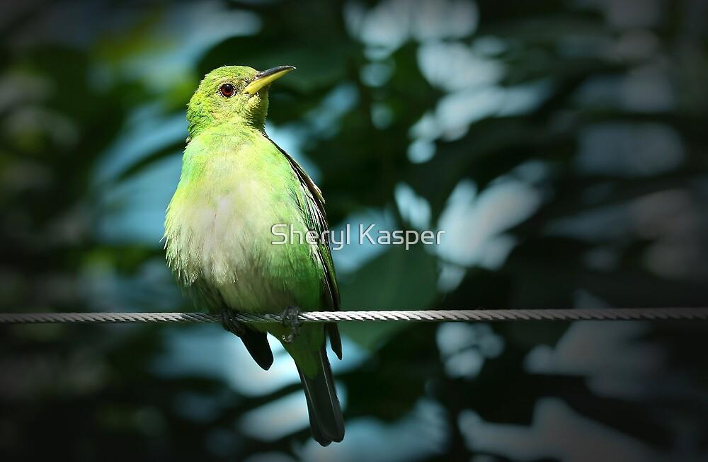 Bird on a Wire by Sheryl Kasper