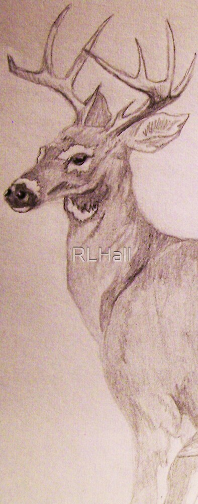 Young Buck by RLHall
