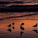 Frühes Treffen am Strand von Evita