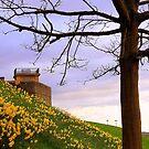 Fahan Street Daffodils.........................Derry by Fara