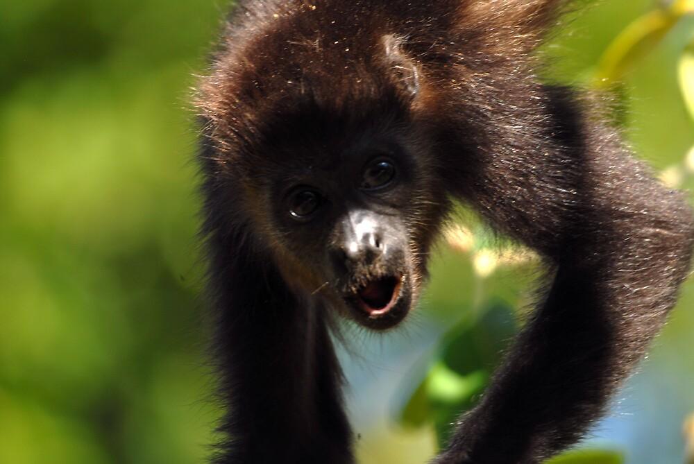Howler monkey by David Bretherick