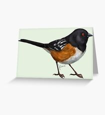 Spotted Towhee #1 Greeting Card