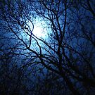Blue Moon for Bev~ by virginian