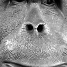 a model orang-utan by melanie tschiderer