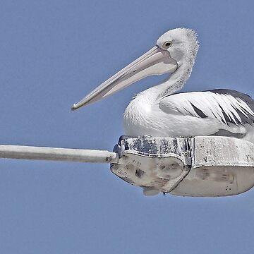 Pelican Platform by grmahyde