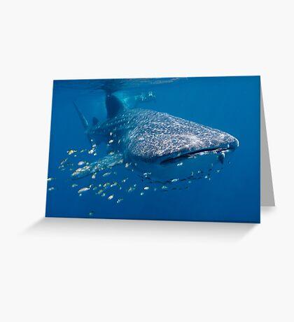 Whale Shark, Ningaloo Reef, Western Australia Greeting Card