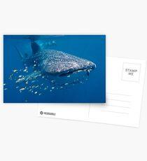 Whale Shark, Ningaloo Reef, Western Australia Postcards