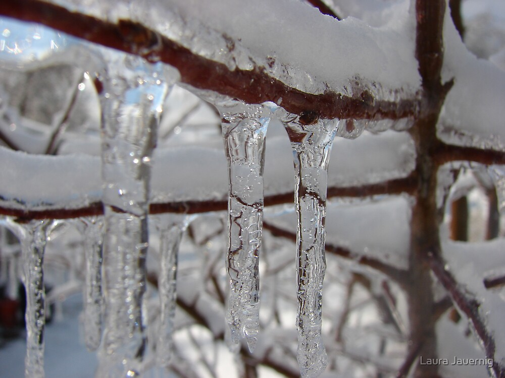 Icy Branch by Laura Jauernig