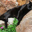 Suki On the Rocks! by Heather Friedman