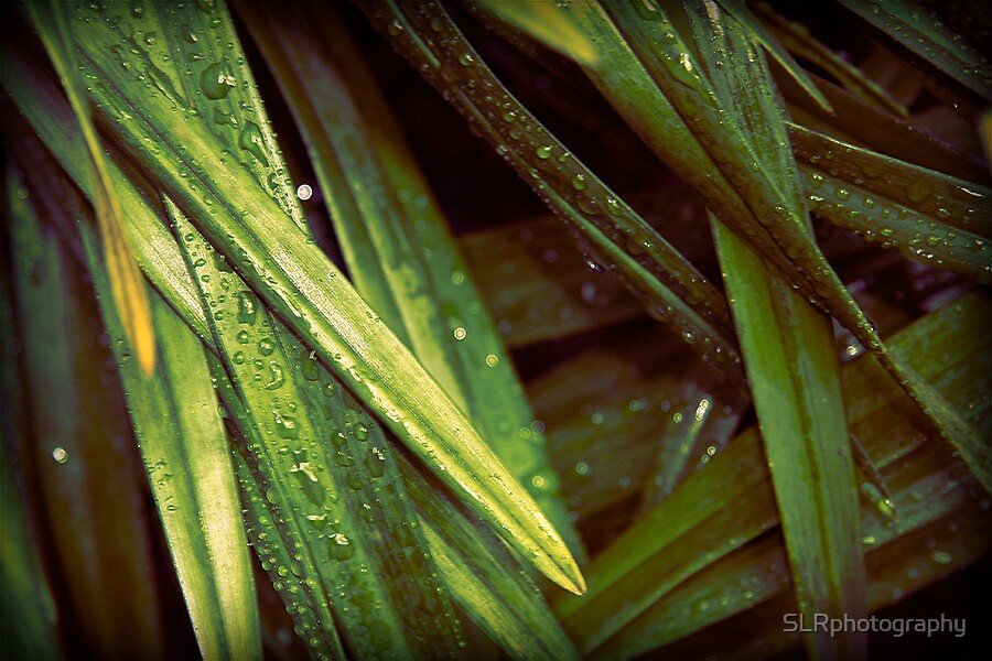 Large Leaves by SLRphotography