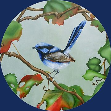 Superb Fairy Wren - Wine Larking - royal blue circle by MCColyer
