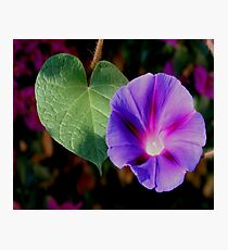 Beautiful Single Morning Glory Flower and Leaf Photographic Print