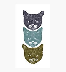 3 Kittens Photographic Print