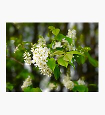 Spring Tree Blossoms Photographic Print