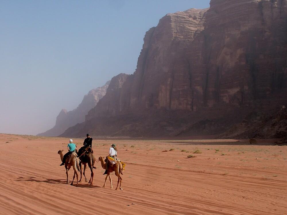 Camels of the desert by Matthew Owen