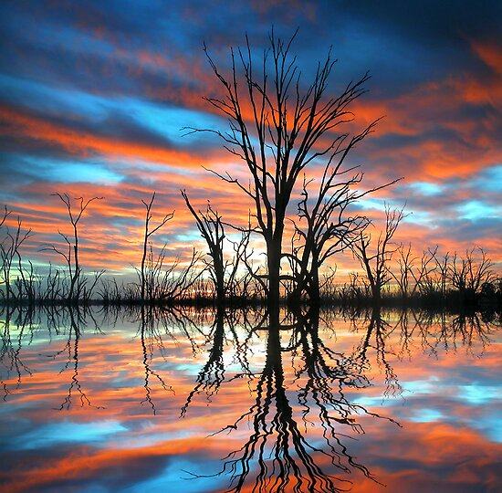 Tree Lake Sunset by Annette Blattman