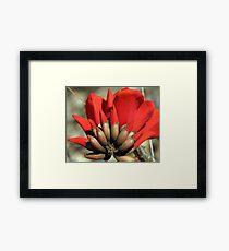 """Erythrina caffra ~ """"Coast Coral Tree"""" Framed Print"""