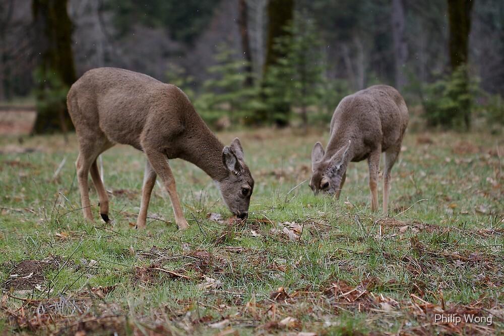 Grazing Deer - Yosemite National Park by Philip Wong