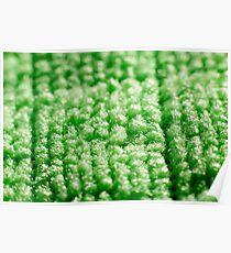 Green Microfibre Cloth Macro Poster