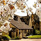Springtime Cotswolds by ScenicViewPics