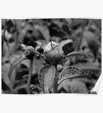 Garden Bloom - B&W version Poster