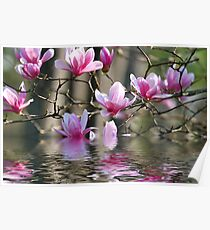 Japanese Magnolia in Water Poster